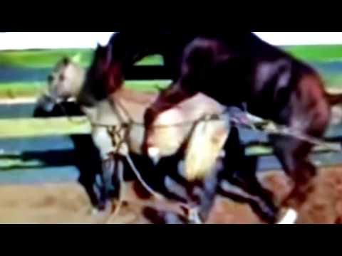 Xxx Mp4 New Video Of Breeding Animals 3gp Sex