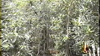 La Madre Tierra. Parque Etnobotánico Omora, Puerto Williams, Chile. Año 2001.