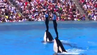 Dolphin Show  The Complete Sea World    fun vedio   YouTube