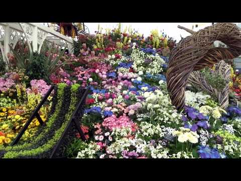 Study Abroad visiting Chelsea Flower Show London