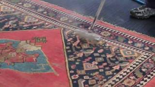 WATCH AS WE WASH AN ANTIQUE RUG!