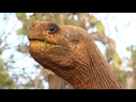 The loneliest animal on the planet BBC Animals