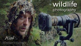 Red Deer - Wildlife Photography | behind the scenes video with wildlife photographer Morten Hilmer