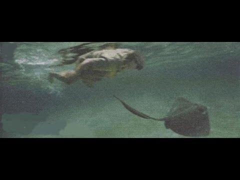 Así murió Steve Irwin s el cazador de cocodrilos en 2006