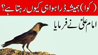Kawa Dara Howa kyon rehta hai || Imam Ali as Says || Crow || کوا || किलोवाट || Mehrban Ali