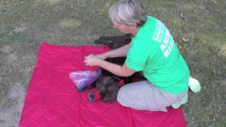 Paw Wrapping