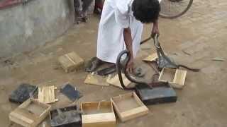 গ্রামবাংলার সাপের খেলা 2014