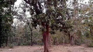Lakha banjara hanuman mandir Temple sarni India(1)