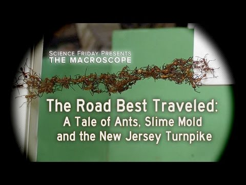 The Road Best Traveled A Tale of Ants Slime Mold and the New Jersey Turnpike