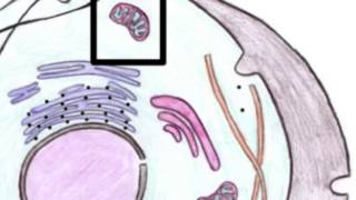 Biologi - Cellen