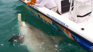 Fishing Awesome 1,000 Pound Hammerhead Shark Giant Fish - Florida Shark Fishing - Chew On This