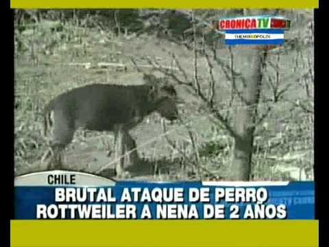 PERRO ATACA Y OTRO SALVA by Bº Rivadavia 1