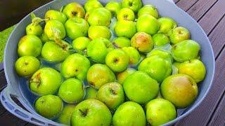 خل التفاح Apple vinegar