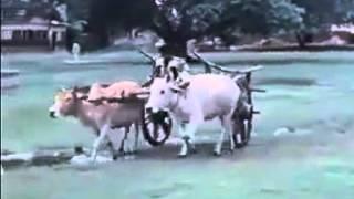 Guerrilla 1971 3