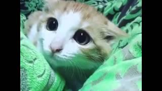 قطة حلوة