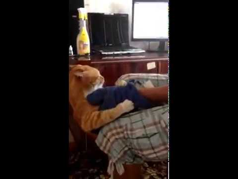Cat attacks man and chases him down