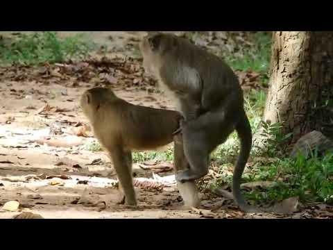 Xxx Mp4 Monkey Love 3gp Sex