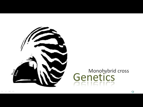 Genetics Monohybrid cross