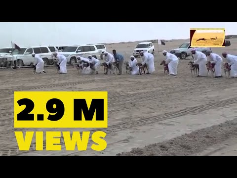 Dogs Race in Saudi Arabia