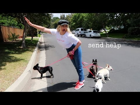 COMPLETE CHAOS Babysitting 4 French Bulldogs Rydel Lynch