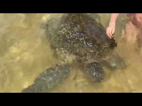 Xxx Mp4 Coral Sands 3 Хиккадува Шри Ланка 3gp Sex
