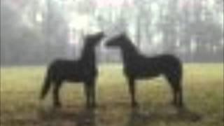 Pavol Hammel - Staré kone a nahé jazdkyne