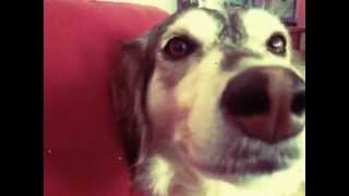 Autotune-Dog