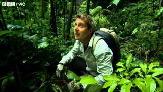 Rainforest Inside a Cave - How to Grow a Planet - Episode 2 - BBC Two