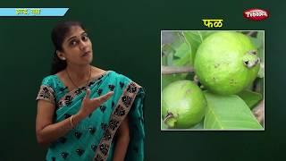 Plants & Trees in Marathi   Learn Marathi For Kids   Marathi For Beginners