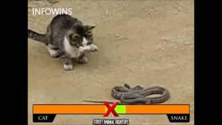 Cat vs Snake ( Gato vs Cobra ) - Fight MMA