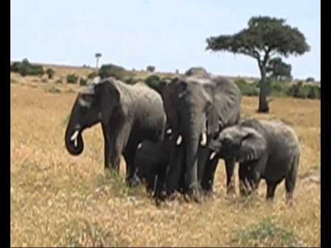 Masaï Mara 2ème jour petite famille d éléphants