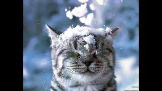 Сніжний кіт 😻 Snow cat ❄ 🐈