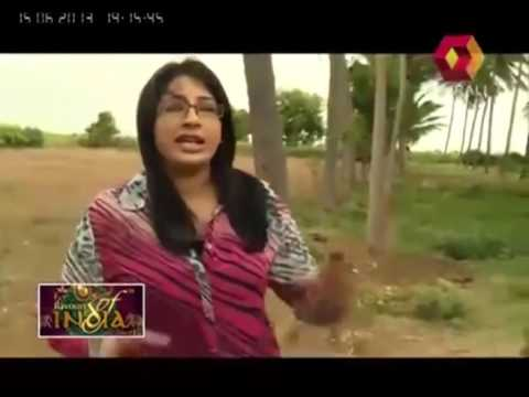 Flavours of India: Spotting Peacock On Tamil Nadu Highway | 15th June 2013