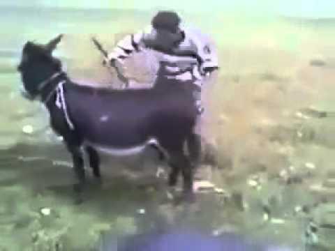 Xxx Mp4 Donkey Starts And Run Hilarious Video 3gp Sex