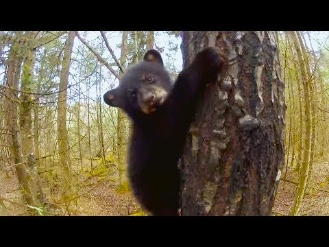 Top 5 Funniest Animal Outtakes BBC Earth