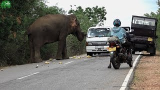 One giant elephant toll booth that accepts food for a pass