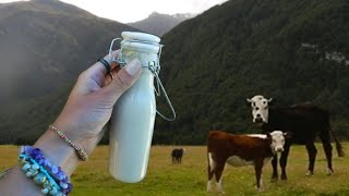 Wonderful Almond milk - 5min recipe