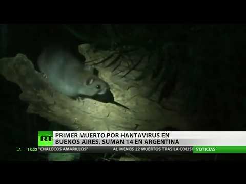 Xxx Mp4 Muere Una Mujer Por Hantavirus En Argentina La Primera Víctima Fatal En Buenos Aires 3gp Sex