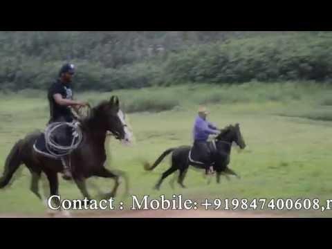 Stallion's Valley Horse Riding Academy kerala.mb.09847400608