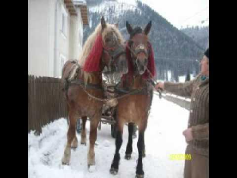 caii frumosi