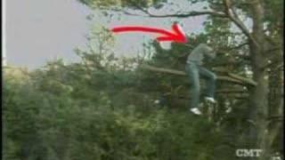 Stupid People and Trees
