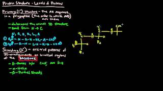 Protein Structure (Part 1 of 4) - Levels of Protein Structure