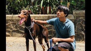 DOG SHORT FILM | BIG POCKET || MOHAK MEET || SEEMA