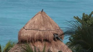 YUCATAN The Culture Is Nature, The Culture Is Maya