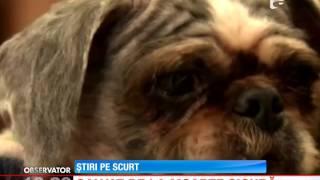 Un câine este salvat de la moarte sigură de un trecator
