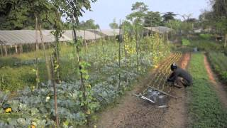 Organic Farming along the Mighty Mekong