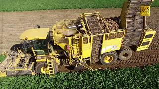 Rübenernte - Zuckerrüben roden - Rübenroder ROPA Euro Tiger V8-4 - Landkreis Uelzen- beet harvester