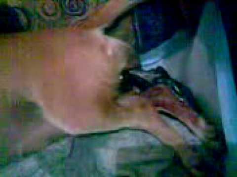 nacimiento de chihuahuas de kane fueron 8