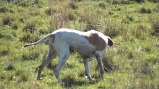 caçando  perdiz  no uruguay
