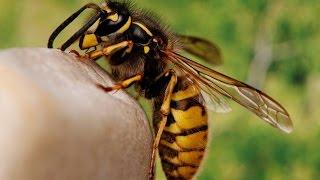 اعرف اكثر| لماذا تموت النحلة بعد قرص الضحية؟